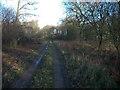 TL6657 : Ditton Park Wood by Hugh Venables