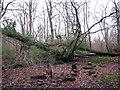 TG2726 : Woodland path by Evelyn Simak