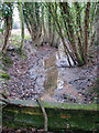 TG2726 : View west along a drain by Evelyn Simak