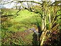 SS7409 : Spring near Cobley by Sarah Smith