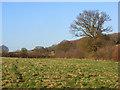 SP9304 : Farmland, Chartridge by Andrew Smith
