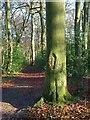 SP9404 : Widmore Wood, Asheridge by Andrew Smith