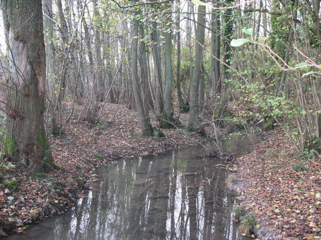 The stream in Lagwood, November 2008