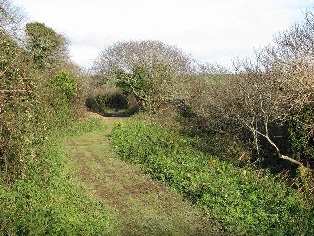 Coastal footpath runs through the woods behind Stoke Beach