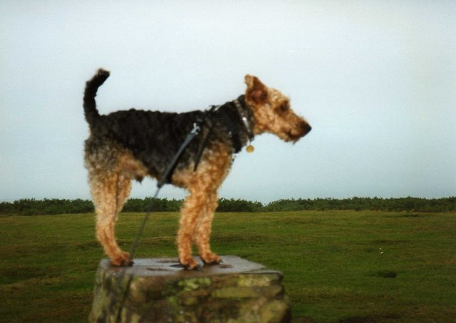 Taffy Robinson at the May Hill trig point.