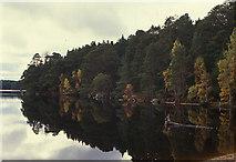 NH9718 : Loch Garten by Nigel Brown