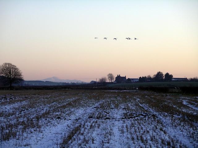 Field near Castle Loch