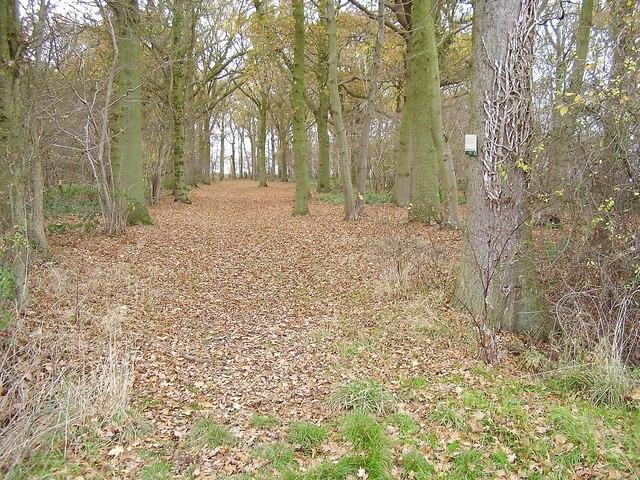 Winding Wood, Edwardstone