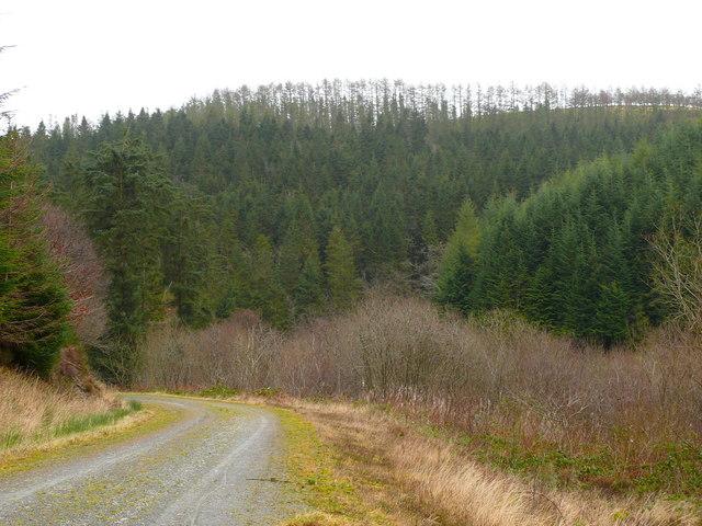 Cwm Gorlech, Fforest Brechfa / Cwm Gorlech, Brechfa Forest