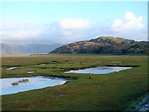 SH6214 : Saltmarsh at Morfa Mawddach by John Lucas