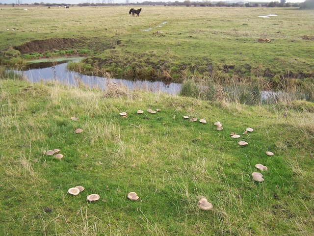 Fairy Ring in Filborough Marshes