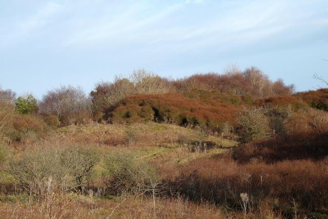 Vegetation on high duneland in the north of Merthyr Mawr Warren
