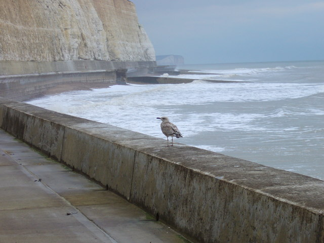 Undercliff walk at Friars' Bay by Shazz