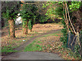 TQ3269 : Walk through wooded area - between Grange Road and Beaulieu Heights by Chris L L