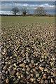 SO9843 : Stony ground by Philip Halling