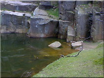 SK2479 : Pool next to Rock face in Bolehill Quarry near Grindleford by James Haynes