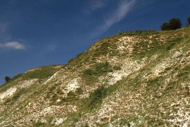 Chalk escarpment, Wharram Quarry nature reserve