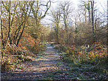 SO5812 : Forest Track by Stuart Wilding