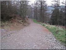 SJ1661 : Forestry Track by David Quinn
