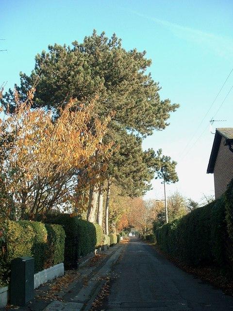 Criftin Road, Burton Joyce