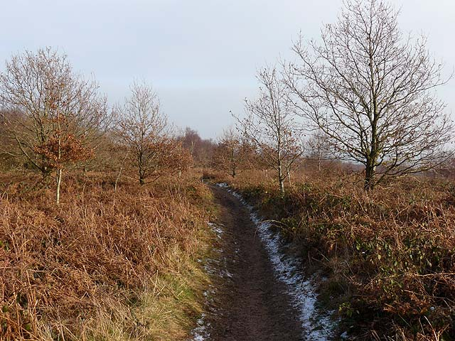 Path on Grey Hill, Wentwood