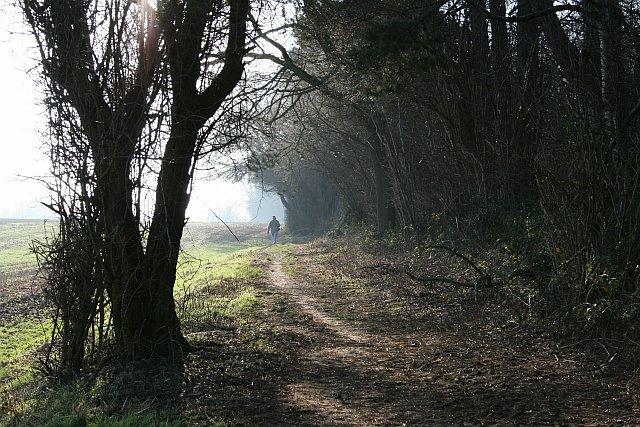Alongside Ruffett Wood