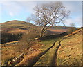 SD1786 : Footpath on the slopes of Knott Hill by Andrew Hill