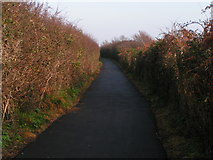 SX9777 : Cycle path between Dawlish and Dawlish Warren by Rob Purvis