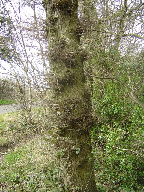 Prevailing wind