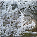 SO0920 : Hoar frost detail by Jonathan Billinger