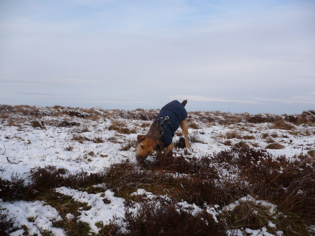 Treacle the Dog on the summit of Hoove