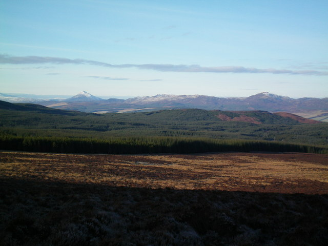 Plantation N of Creag Craiggan