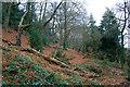 SK4338 : Ockbrook Wood by David Lally