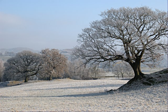 Winter Trees 169 Jerry Evans Cc By Sa 2 0 Geograph