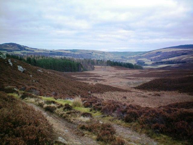 Track above Dalvey