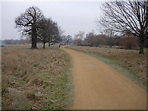 TQ2173 : All weather path in Richmond Park by Hugh Venables