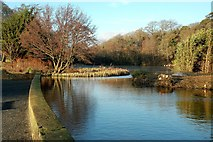 NS2209 : At The Swan Pond by Mary and Angus Hogg
