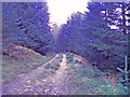 NH3817 : Track continuing to Coille Levishie. by Sarah McGuire