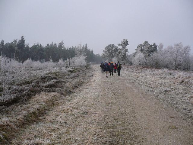 Track and public footpath through Baxton's Wood