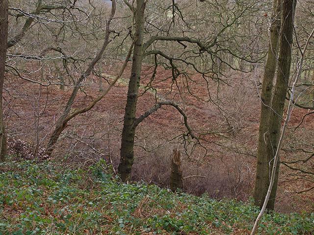 Newton Woods in winter