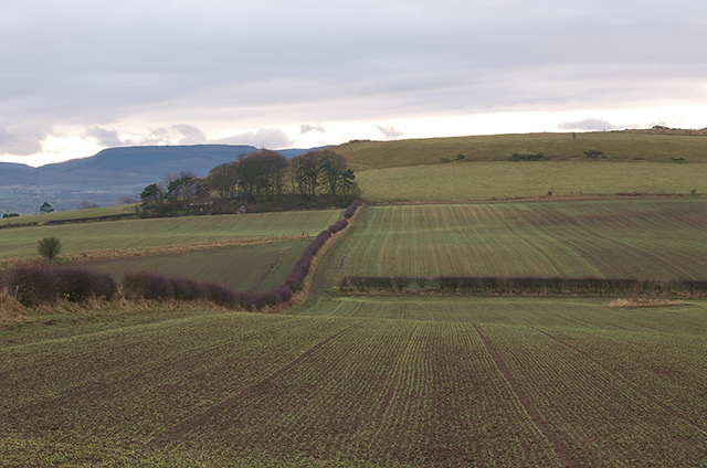 Fields between Roseberry Topping and Cliff Rigg