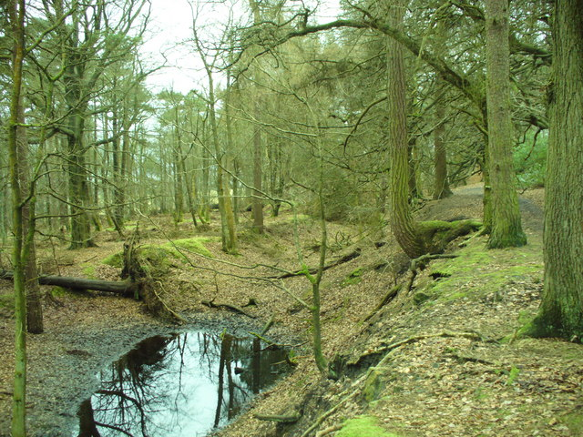 Old Fireclay Pit - In Shady Walks