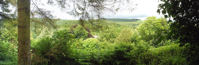 The view from Glendue Wood