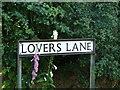 TG3818 : Lovers Lane Ludham by PAUL FARMER