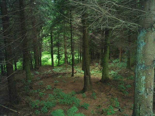 Woodland at Glendue Wood