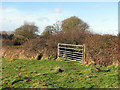 TF9629 : Field gate in hedgerow by Evelyn Simak