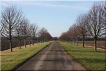 TL8068 : Driveway to Brakey Pin Hall Farm by Bob Jones