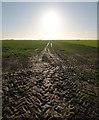 TA3524 : Holderness Farmland by Andy Beecroft