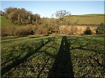 SX8158 : Shadows by the Dart Valley Trail by Derek Harper