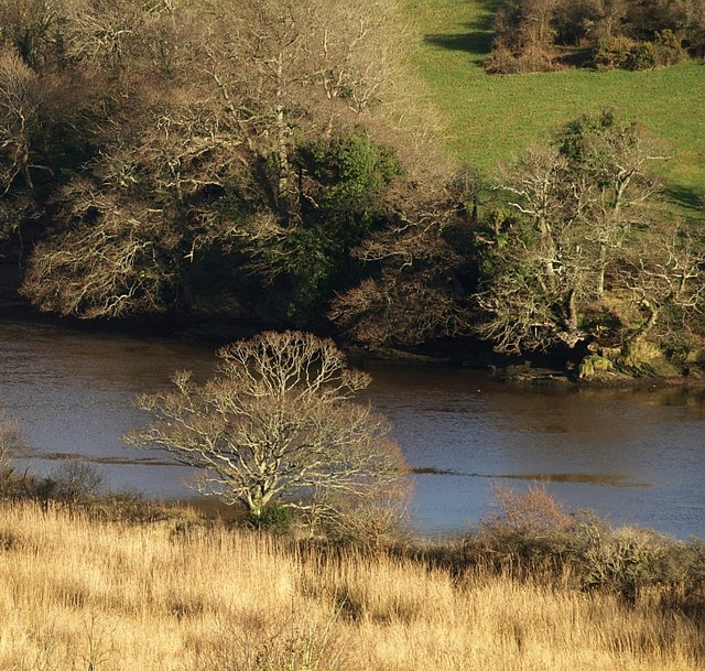 Trees by the River Dart